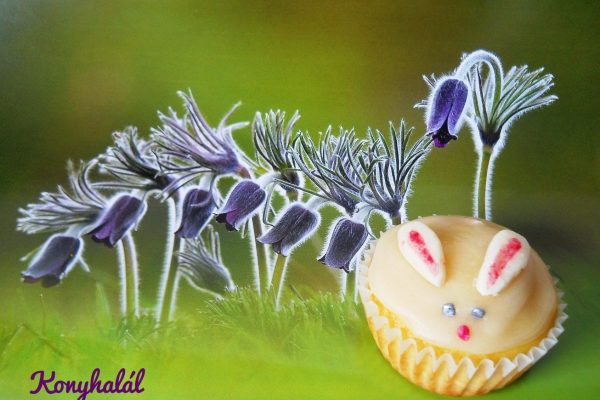 Nyuszi (muffin) ül a … kökörcsin alatt