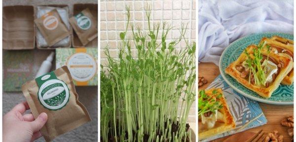 Én kis kertészleány lettem, mikrozöldet nevelgettem