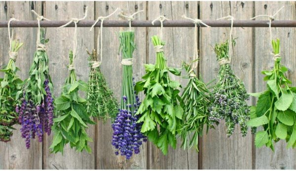 Kvíz – Felismered a fűszernövényeket?
